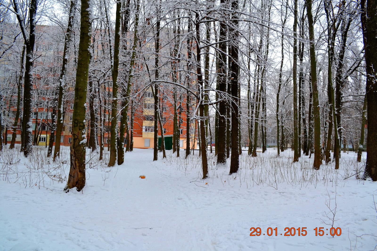 Как я побегал в Гришкином лесу 29 января